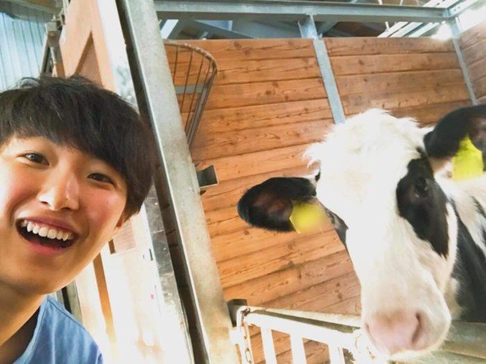 大学病院にいた子牛