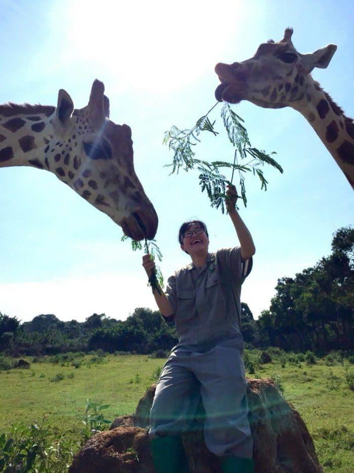 海外の動物園のボランティアワークでキリンと戯れる