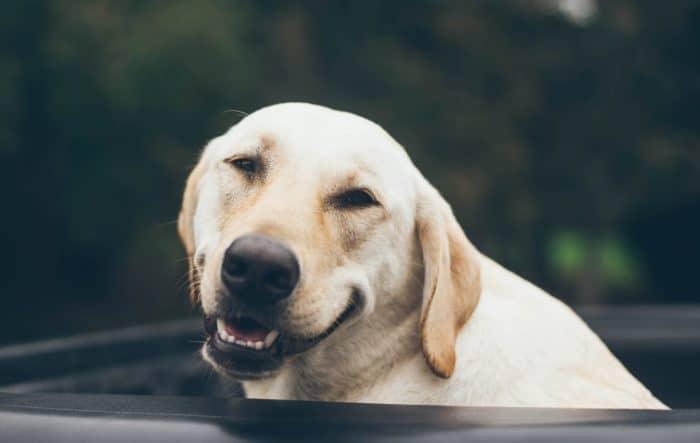 喜ぶ犬の画像